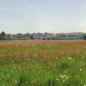 Nella campagna tra Villa Ricotti La Valera e Villa Arconati